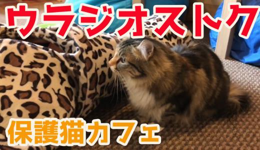 【ウラジオストク旅行】保護猫カフェ・ヴァレリヤニチ(Валерьяныч)で癒されてきた!